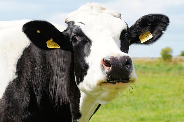 Mleko bez tajemnic,  25 maja to Światowy Dzień Mleka