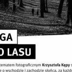 Mieszkaniec Katowic zachwyca zdjęciami przyrody. Zobacz ?Drogę do lasu?